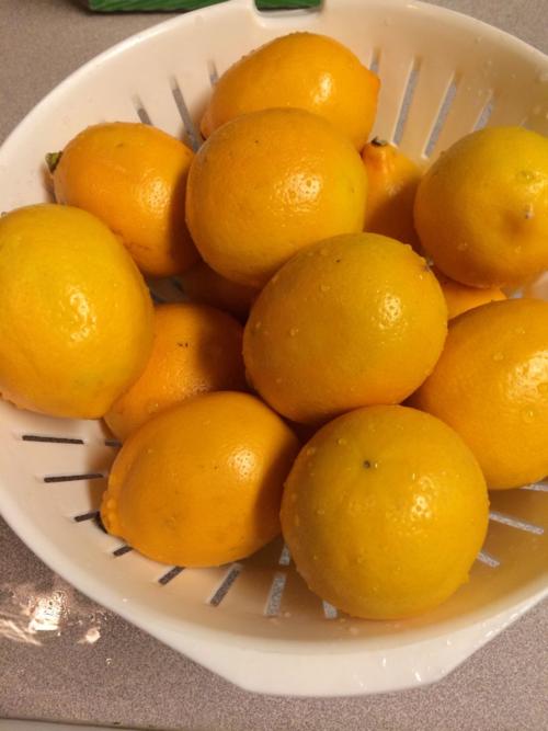 How to Make Meyer Lemon Marmalade