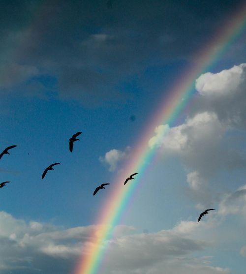 Rainbow 2-1