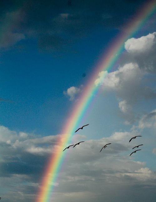 Rainbow 3-1
