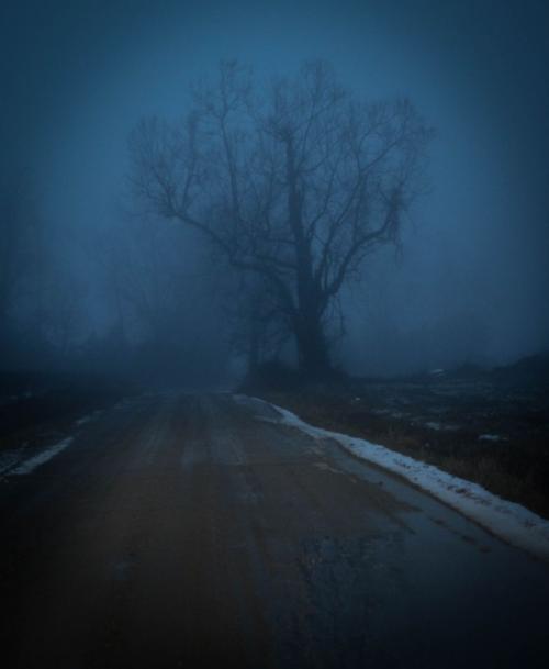 Fog_1-1