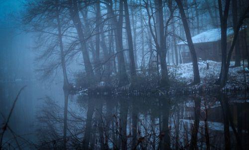 Fog_11-1